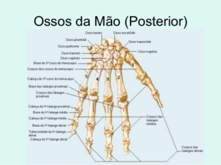 resize-500x375_anatomia-da-mao